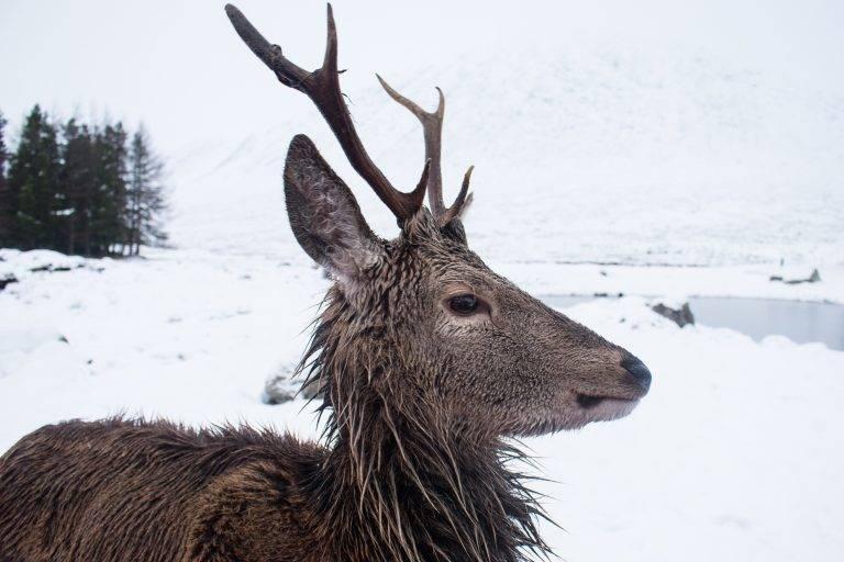 Wildlife in Loch Lomond