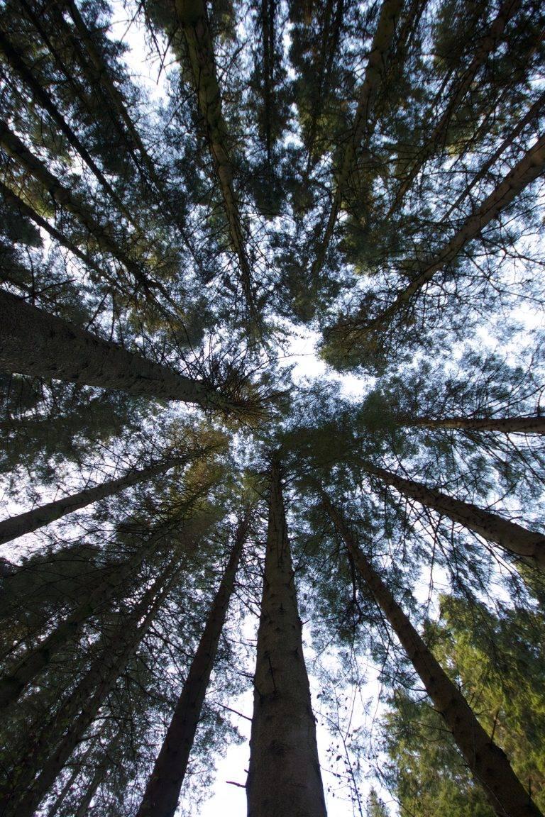 rossmayhouse-area-portrait-trees